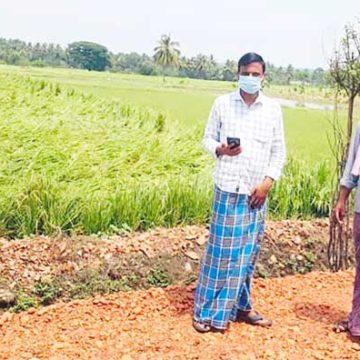 ಭಾರೀ ಮಳೆ: ಹರಿಹರ ತಾಲ್ಲೂಕಿನಲ್ಲಿ ಭತ್ತದ ಬೆಳೆಗೆ ಹಾನಿ